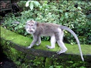 Monkey Forest Sanctuary - Bali Indonesia (21)